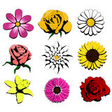 Nine flowers. Nine isolated flowers,  illustrations, image format - square Royalty Free Stock Photos