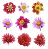 Nine flowers Stock Image