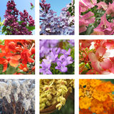 Nine garden flowers Royalty Free Stock Photography