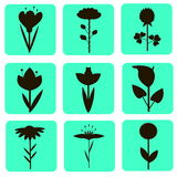 Nine icons silhouettes of flowers in turquoise squares Stock Photography