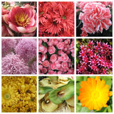 Nine images of flowers Royalty Free Stock Photos