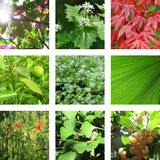Nine images with leaves Royalty Free Stock Photo