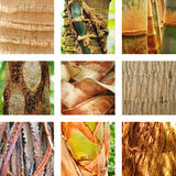 Nine images of palm trees Royalty Free Stock Images