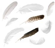 Nine isolated feathers Royalty Free Stock Photography