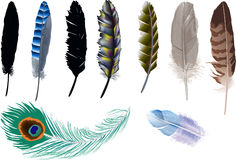 Nine isolated feathers illustration Stock Photo