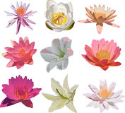 Nine isolated lily flowers collection Stock Images