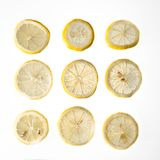 Nine lemon slices against an isolated background Stock Images