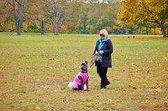 Nine month old cane corso italian mastiff in dress royalty free stock photo
