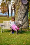 Nine month old cane corso italian mastiff in dress Royalty Free Stock Images