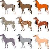 Nine multicolored horses Royalty Free Stock Photo