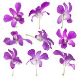 Nine Purple orchids isolated on white Royalty Free Stock Images