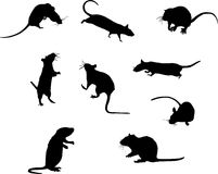 Nine rat silhouettes Royalty Free Stock Photo