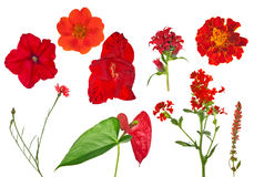 Nine red flowers collection isolated on white Royalty Free Stock Images