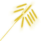 Nine ripe spikelets Royalty Free Stock Image