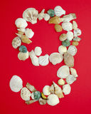 Nine with sea shells. Number nine arrange from sea shells royalty free stock photo