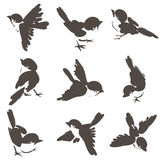 Nine sparrow poses. Nine sparrow stances vectorization of sketches inspired by the oriental painting style of ink wash Stock Photo