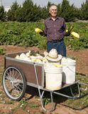 Ninety-One year old farmer and Squash. Ninety-One year old farmer holding squash while standing by a cart full of squash with the garden in the background Royalty Free Stock Images