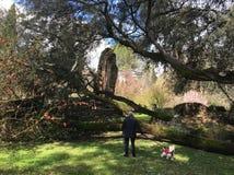 Ninfa庭院的访客最普遍的意大利公园 库存图片