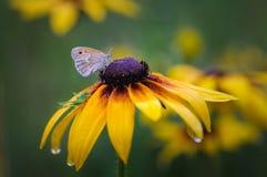 Ninfa de la mariposa y del saltamontes Fotografía de archivo libre de regalías