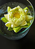 Ninfea in vaso Fotografie Stock