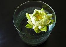 Ninfea in vaso Fotografia Stock Libera da Diritti