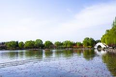Ninfee sul lago, salici in molla in anticipo e fiori variopinti immagini stock libere da diritti