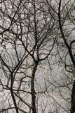 Ningún árbol de las hojas Foto de archivo