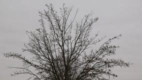 Ningún árbol de la hoja Fotos de archivo