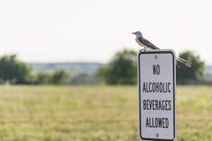 Ningunas bebidas alcohólicas permitidas Foto de archivo