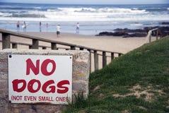 Ningunos perros imagenes de archivo
