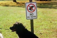 Ningunos perros permitidos fotos de archivo libres de regalías