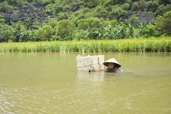 Ninh Binh, Vietnam - May 16, 2015: Vietnamese woman catches freshwater shellfish on river in Tam Coc. Life is difficult to a lot o. F poor people living in rural Stock Photo