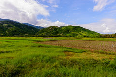 Ninh Thuan, Vietname - Otc 2016 - campo Imagens de Stock Royalty Free