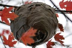 Ninho abandonado do zangão alto em uma árvore foto de stock