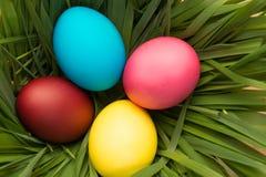Ninho com grama verde e quatro ovos da páscoa Fotografia de Stock Royalty Free