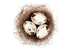 Ninho com ovos Imagens de Stock Royalty Free