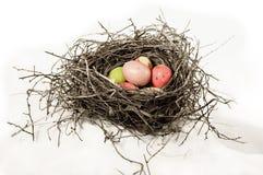 Ninho com ovos dos piscos de peito vermelho Fotografia de Stock