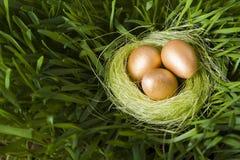 Ninho com ovos dourados Imagem de Stock