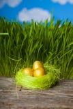 Ninho com ovos dourados Fotos de Stock