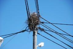 Ninho conectado do pássaro Imagem de Stock