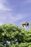 Ninho da águia pescadora Foto de Stock Royalty Free