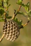 Ninho da abelha foto de stock