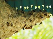 Ninho da vespa Imagens de Stock