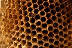 Ninho da vespa Foto de Stock Royalty Free