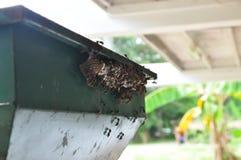 Ninho da vespa com as vespas que sentam-se nele foto de stock