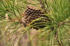 Ninho da vespa com vespas imagem de stock