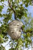 Ninho da vespa na árvore imagens de stock