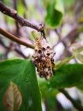 Ninho da vespa 4 vespas do guardião que protegem seus ninho e ovos Fotografia macro fotos de stock royalty free