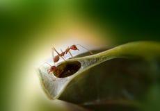Ninho das formigas Fotografia de Stock