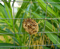Ninho das vespas fotografia de stock